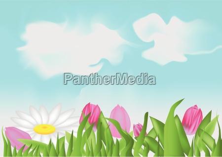 tulpen und kamille