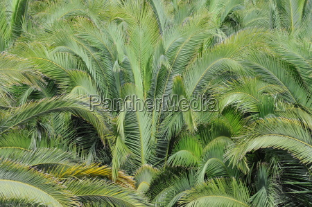 spanien palmen