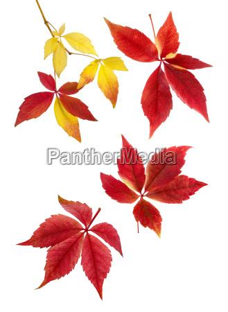 harmonious arrangement of autumn leaves