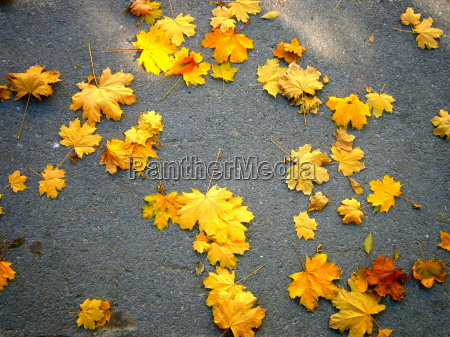 yellow leaves on the gray