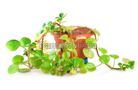 blatt baumblatt freisteller closeup blume pflanze