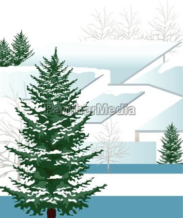 green fur tree