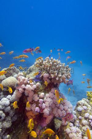 unterwasser exotisch fischschwarm kunstspringen tauchend unterwasser