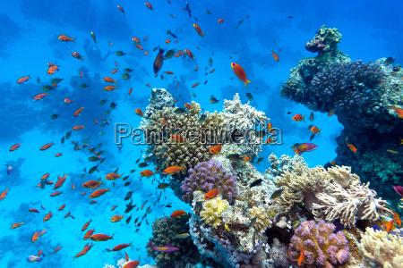 korallenriff mit weichen und harten korallen