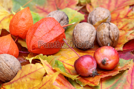 autumn foliage with decorative apples and