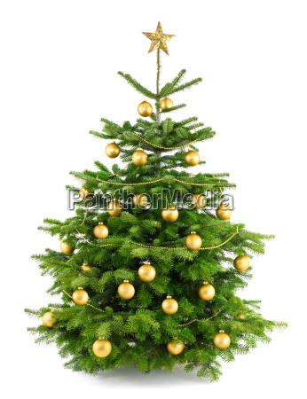 dichter gold geschmueckter weihnachtsbaum
