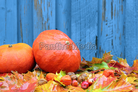 autumn foliage with blue background and