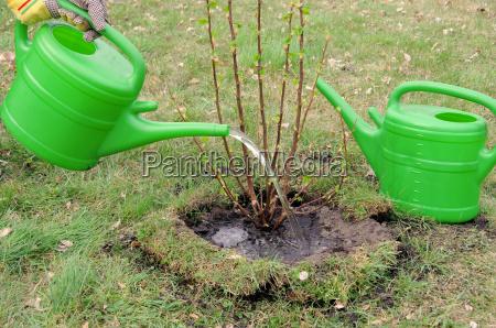 strauch angiessen watering a shrub