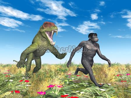 homo habilis die evolution des