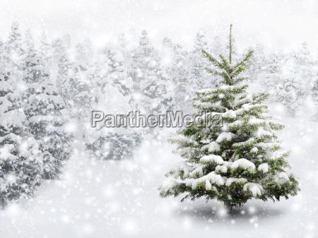tannenbaum in beautiful snowfall