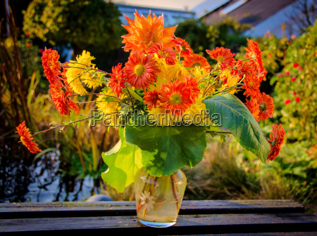 colorful flowers in autumn garden