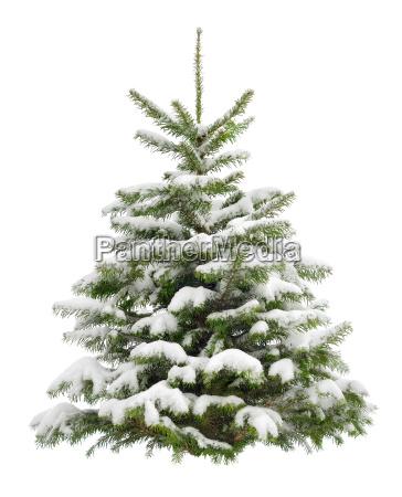perfekter verschneiter weihnachtsbaum isoliert