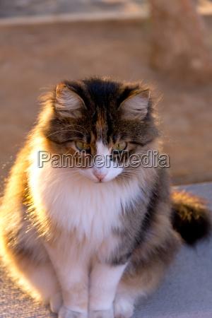 katze katzenbaby kaetzchen jung gesicht mutter
