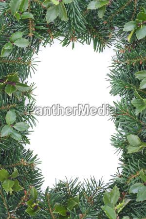 isolated fir fir branch fir branches