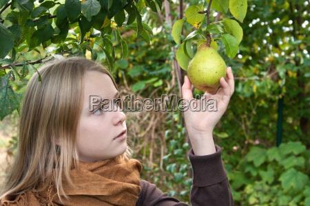 blatt baumblatt baum baeume blaetter reif