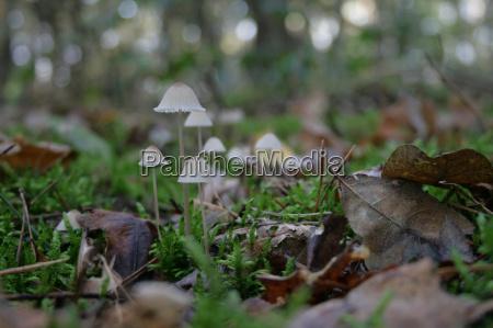 mushrooms wood nature leaves green brown