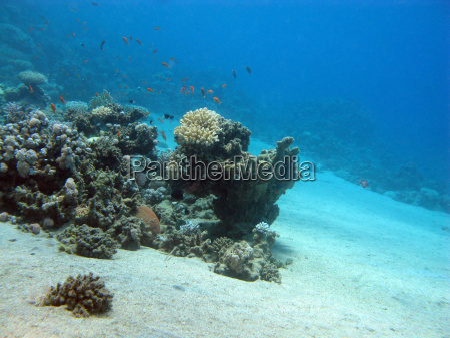 korallenriff mit exotischen fischen auf dem