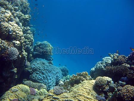 tier fisch unterwasser aegypten wildlife salzwasser