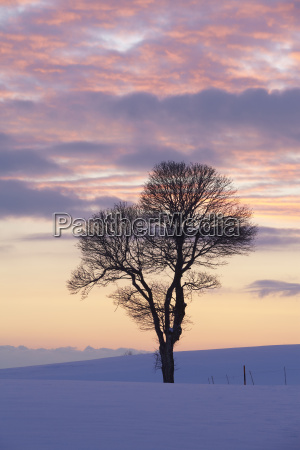 tree in a winter landscape at