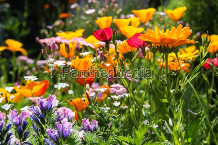 colorful summer flowers