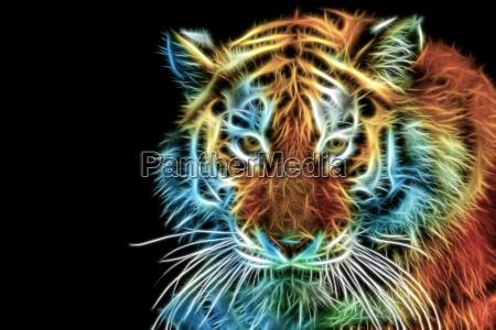 abstrakter kopf des tigers
