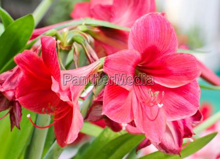 garten blume pflanze gewaechs tulpe dekoration