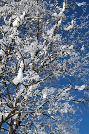 blue tree trees winter frost branch