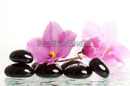 spa stones with flower isolated
