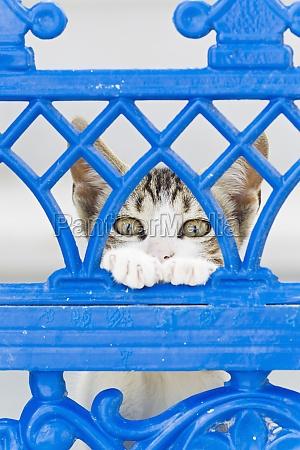 kaetzchen katze in den strassen von