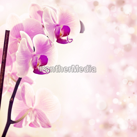 pink orchid on spring background