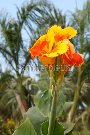 Blume, Blumen, Pflanze, Pflanzen, Kuba, Natur - 10820610