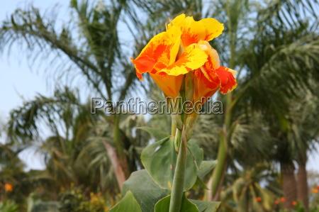 Blume, Blumen, Pflanze, Pflanzen, Kuba, Natur - 10820616