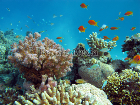 unterwasser fischschwarm tropische tropisch kunstspringen tauchend
