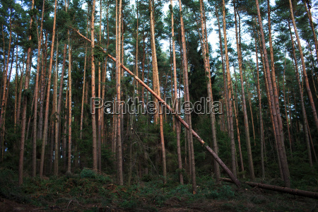 forest with fallen trees in the