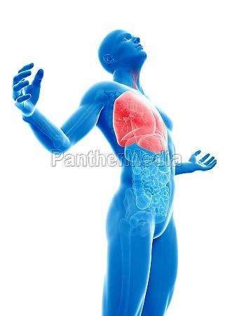 maennlich posing hervorgehoben lunge