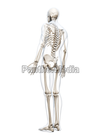 3d rendered illustration of the human