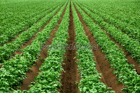 agriculture with strong green