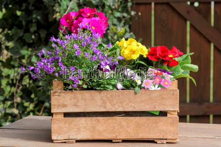 crate with spring flowers