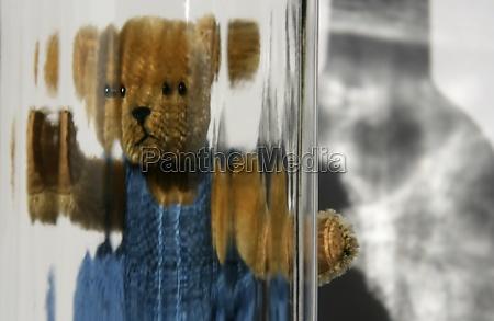 teddy mit durchblick