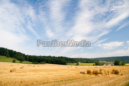 summer field with straw bales