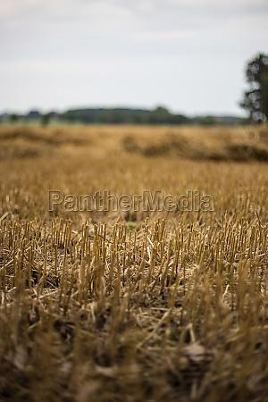 stubblefield