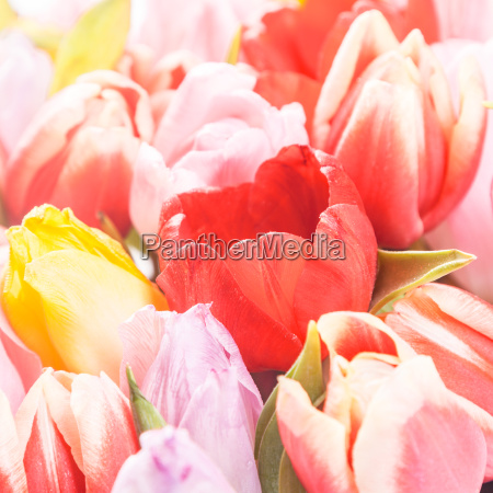 spring background of pink and yellow