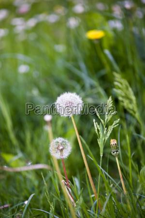 blatt baumblatt baum park garten blume