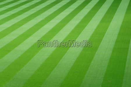 gruen gruenes gruener gruene feld stadion
