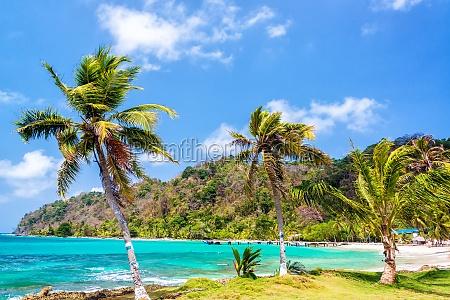 drei palmen in panama