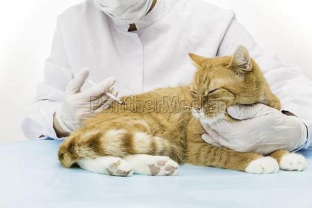 tierarzt bei behandlung spritze geben