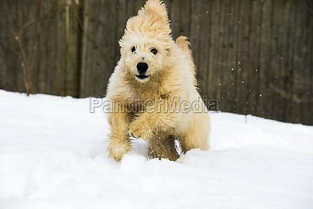 welpe im schnee