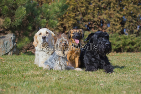 a group of four dogs of