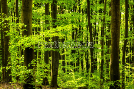 fresh greens in the deciduous forest