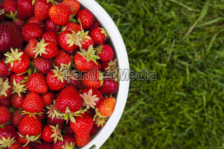 pail of fresh strawberries on green
